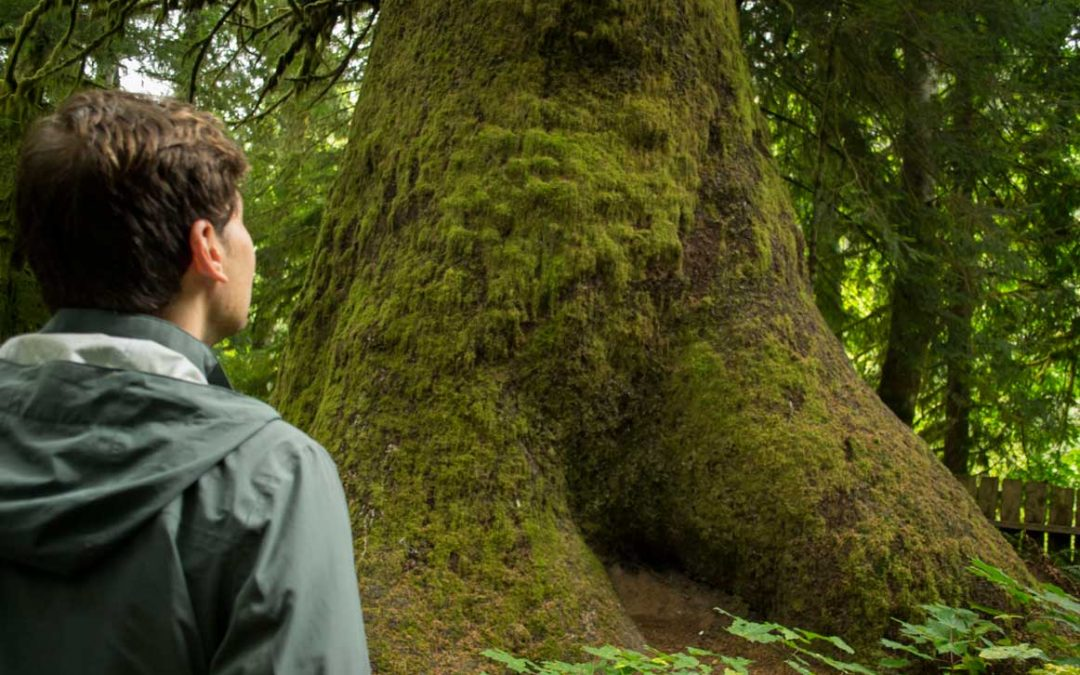 Rainforest hike on a Vancouver Island travel deal.